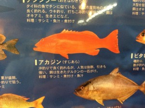 fishes_001